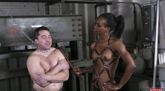 Kelise in  Transexdomination Kelise Wraps Her Sub March 20, 2014  Transsexual