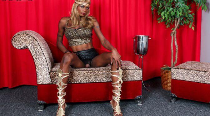 Paris Foxx in  Blacktgirls Paris Foxx Strips And Strokes December 17, 2013  Transsexual