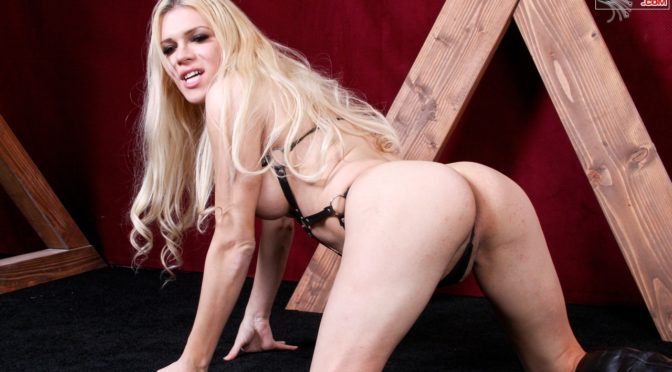Jesse in  Transexdomination Jesse Pounds Her Sub November 17, 2015  Transsexual